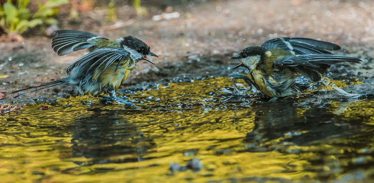 Na przecięciu ptasich dróg. Wystawa fotografii Janusza Witowicza